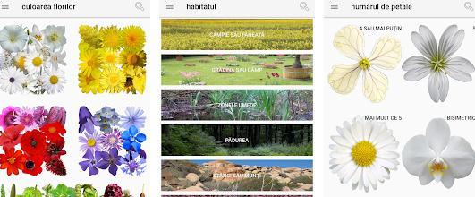Aplicații de recunoscut plante Android sau iPhone Ce floare este aceasta