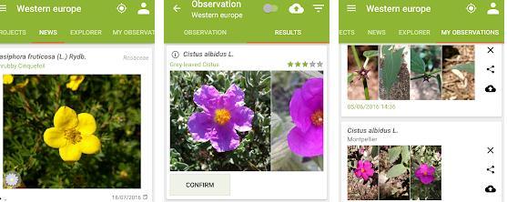 Aplicații de recunoscut plante Android sau iPhone PlantNet