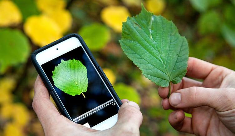 Aplicații de recunoscut plante Android sau iPhone