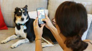 Aplicații pentru câini (căței) iPhone sau Android